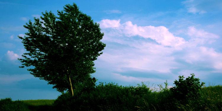 Horizont, Wind, Acker, Sonne, Baum, Himmel