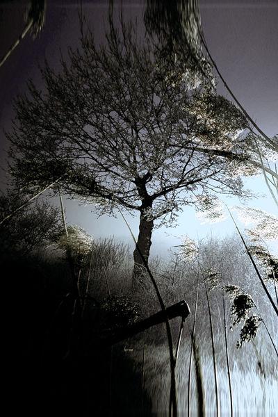 Busch, Himmel, Wolken, Schatten, Zweig, Licht