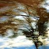 Zweig, Himmel, Vorbeifahren, Wind