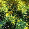 Mehr als Raps - raps blüten feld pflanzen wind wärme schatten licht sonne stengel