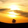 Himmel, Weite, Baum, Feld