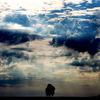 Baum, Wind, Wolken, Licht