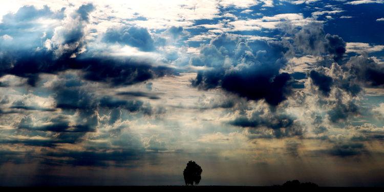 Horizont, Weite, Baum, Wind, Wolken, Licht