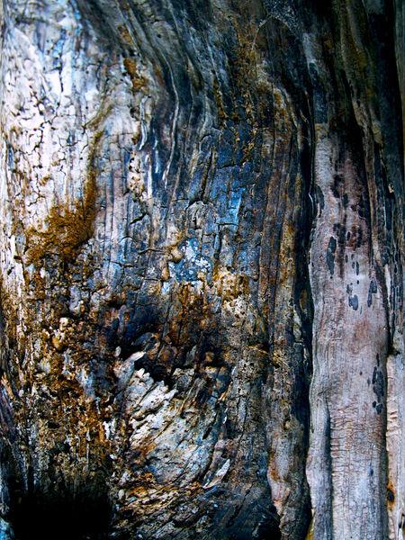 Kastanien, Blitz, Holz, Struktur, Baum, Licht