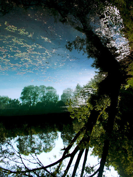 Wolkenblätter, Kühl, Weiher, Baum, Äste, Spiegelung