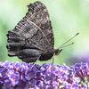 Schmetterling, Blumen, Sommer, Makro