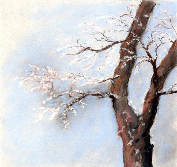 Pastellmalerei, Rauhreif, Baum, Kalt, Äste, Winter