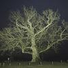 Monumentale bäume, Kreuzeiche, Hürbel am rangen, Nacht