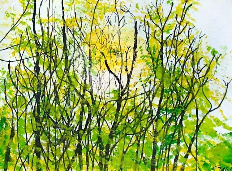 Licht, Farben, Romantisch, Wald, Natur, Frühling