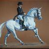 Dressur, Pferdesport, Dressurpferd, Schimmel