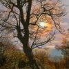 Panoramabaum, Digitale malerei, Meer, Baum