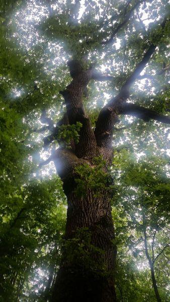 Licht, Baum, Äste, Eichen, Fotografie