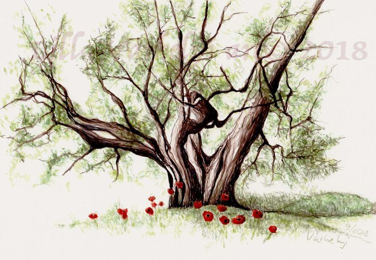 Tuschezeichnung, Pflanzen, Olivenbaum, Skizze, Natur, Sommer