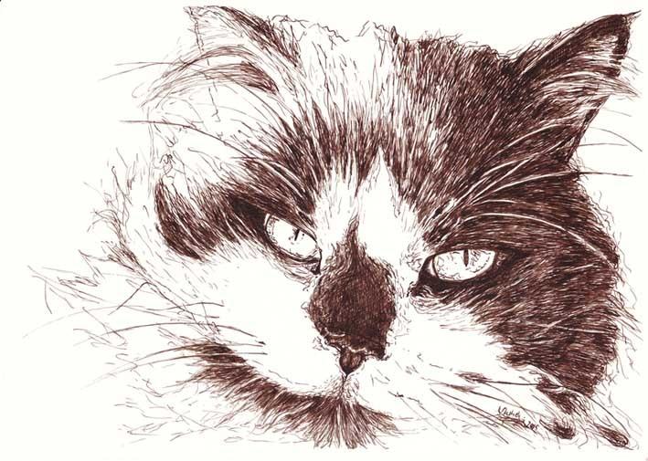 Tusche, Tiere, Bister, Katze, Langhaarkatze, Federzeichnung