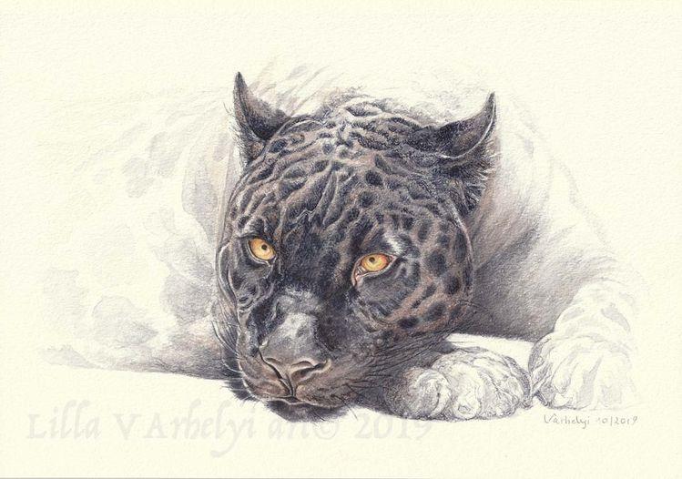 Tuschmalerei, Panther, Tierwelt, Tierzeichnung, Großkatze, Wildtier