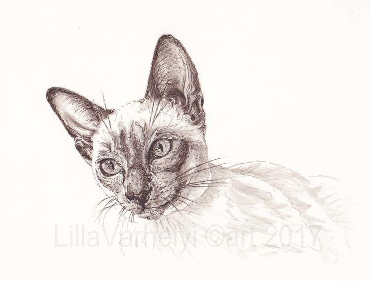 Tuschezeichnung, Siamkatze, Monochrom, Zeichnung, Siamcat, Buch