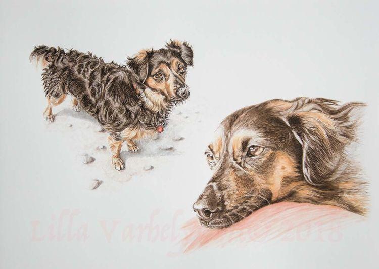Hund, Mischlingshund, Tierportrait, Tiere, Tuschezeichnung, Zeichnungen