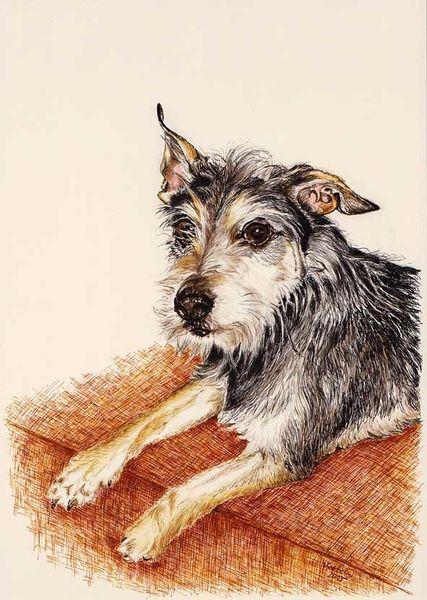 Hund, Tierportrait, Tiere, Tusche, Federzeichnung, Zeichnungen