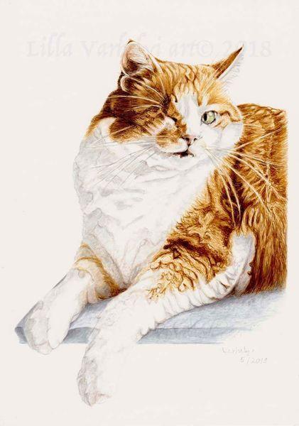 Tuschezeichnung, Tierportrait, Katze, Zeichnung, Animaldraw, Zeichnungen