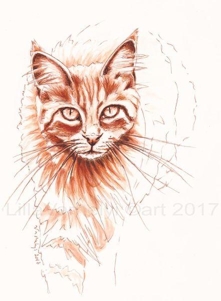 Monochrom, Rotekatze, Zeichnen, Katze, Maincoon, Tuschezeichnung