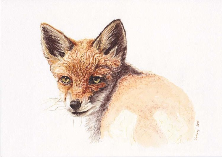 Fuchs, Natur, Tiere, Federzeichnung, Wild, Malerei