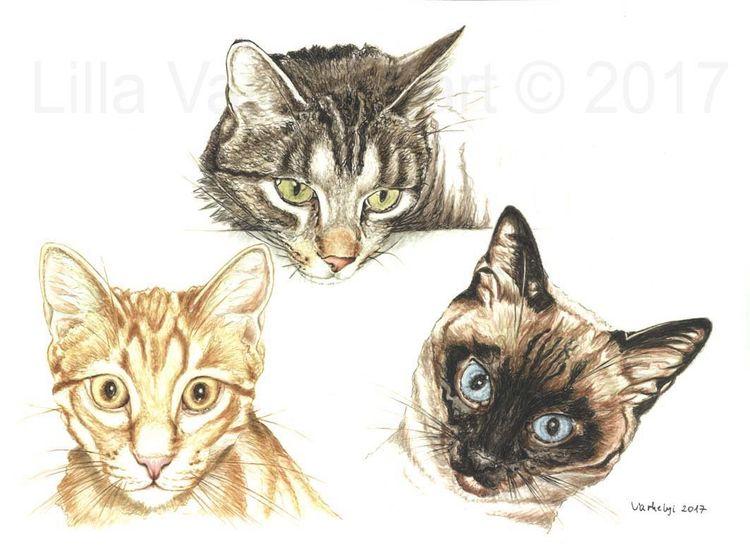 Tierportrait, Gingercat, Tiere, Figurativ, Realismus, Zeichnung