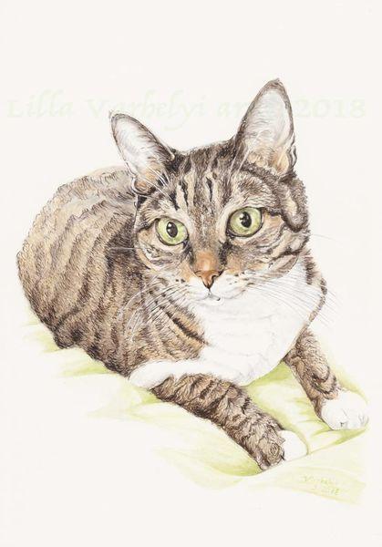 Katze, Commission, Tuschezeichnung, Tabbycat, Tuschmalerei, Tierportrait