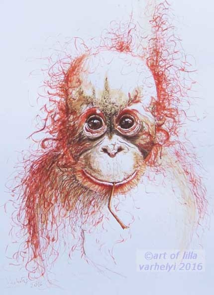 Tusche, Federzeichnung, Orang utan, Tiere, Tierportrait, Zeichnungen