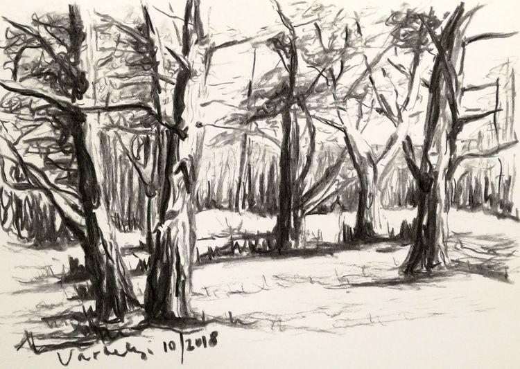 Skizze, Baum, Kohlezeichnung, Zeichnung, Wald, Natur