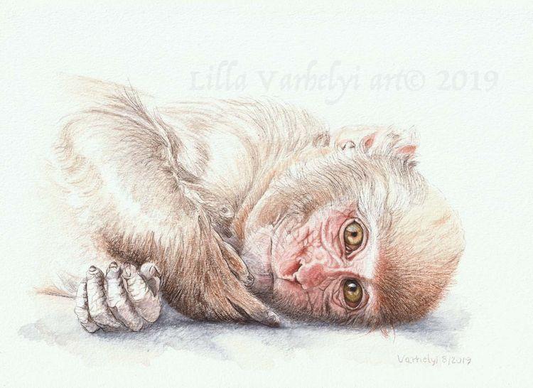 Zeichnung, Tierwelt, Tuschmalerei, Affe, Wildtier, Tiere