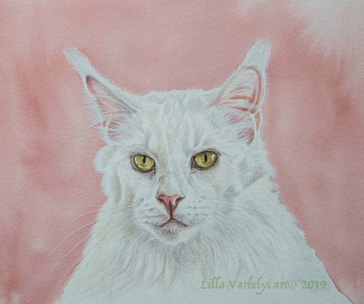 Tuschmalerei, Auftragsarbeit, Katze, Tierportrait, Weiß, Maincoon