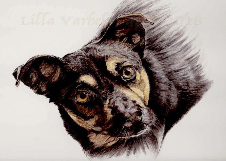 Hund, Tusche, Tiere, Tierportrait, Zeichnung, Zeichnungen