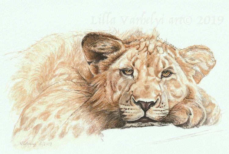 Wildtier, Tuschmalerei, Tierwelt, Löwin, Löwe, Tiere