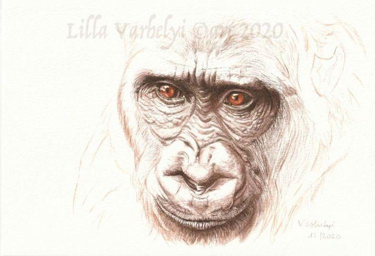 Primat, Tuschezeichnung, Wildtier, Affe, Zeichnung, Inkdrawig