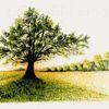 Natur, Gegenlicht, Tusche, Baum