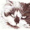 Tiere, Bister, Katze, Langhaarkatze