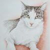 Auftragszeichnung, Tierportrait, Tierzeichnung, Katze