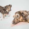 Hund, Mischlingshund, Tierportrait, Tiere
