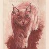Kaltnadelradierung, Tuschmalerei, Katze coloriert, Tiefdruck