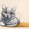 Tierportrait, Augen, Katze, Tusche