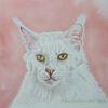 Tierportrait, Weiß, Katze, Maincoon