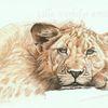 Löwe, Tiere, Wildtier, Müde