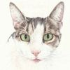Tiere, Katze, Tierportrait, Auftragszeichnung