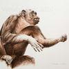 Wildtier, Tuschezeichnung, Tuschmalerei, Primaten