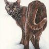 Tuschezeichnung, Tierportrait, Katze, Tuschmalerei