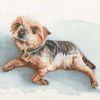 Hund, Tierzeichnung, Auftragsarbeit, Tierportrait