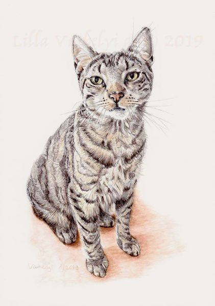 Auftragsarbeit, Katze, Tiere, Tuschmalerei, Zeichnungen, Rocky