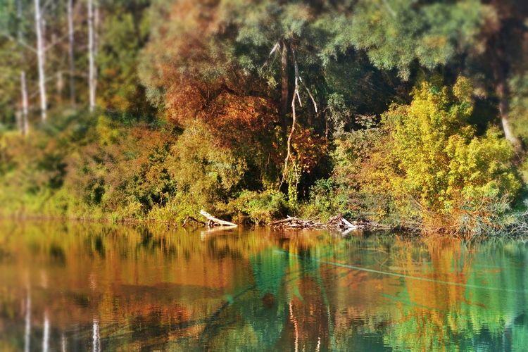Farben, Vogelparadies, Auwald, Oberösterreich, Naturschutzgebiet, Linz