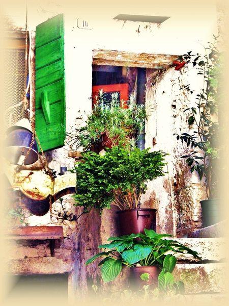 Landleben, Fenster, Dekoration, Topfpflanzen, Urlaub, Vergänglichkeit