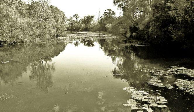 Gewässer, Krafttier, Stille, Stadtgebiet, Naturschutz, Erholung